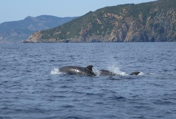 dauphinsbandb s